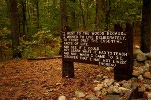 Thoreaus_quote_near_his_cabin_site,_Walden_Pond